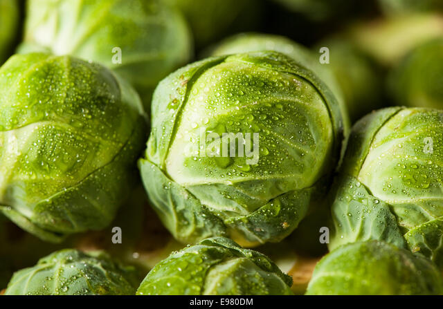 Raw Green Organic Brussel Sprouts on the Stalk - Stock Image