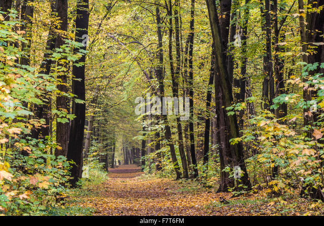Path in the city forest, autumn mood, Weimar, Thuringia, Germany - Stock Image