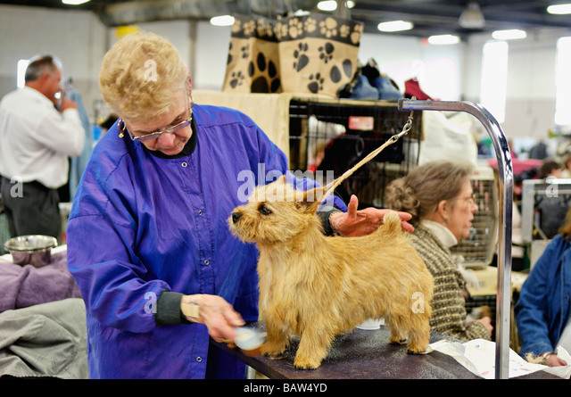 Louisville Kennel Club Dog Show