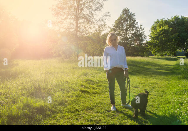 A woman dressed in white walks her small black dog in a London park at dusk in the summertime - Stock Image