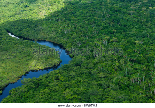 Lush rainforests of 406-square-mile Rio Bravo Conservation and Management Area, home to puma, jaguar, ocelot, jaguarundi - Stock Image