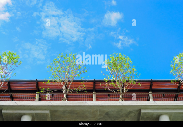 trees on roof deck - Stock Image