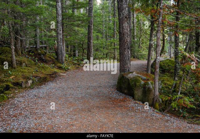 Wanderweg zu den Brandywine Falls, Wasserfall, Brandywine Falls Provincial Park, British Columbia, Kanada, Nordamerika - Stock Image