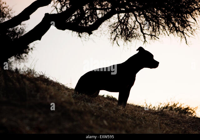 Silhouette profile medium adult dog sitting under silhouette tree on hillside - Stock Image