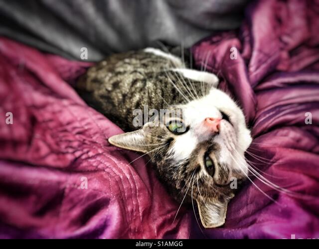 Cat. - Stock-Bilder