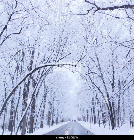 Tree lined road in winter, Illinois, America, USA - Stock Image