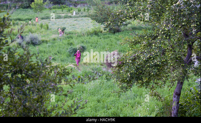 hunza black single women Hunza valley is located at 7,999' in northern  he reported that not one of these men showed a single sign of  ( renee taylor says hunza women have.