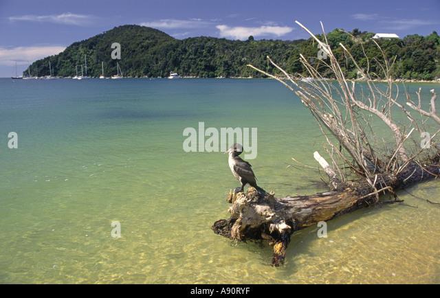 new zealand south island Abel Tasman National Park Cormoran - Stock Image