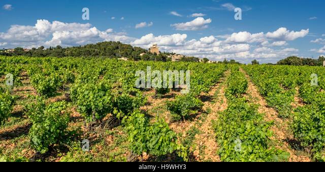 vineyards at Chateauneuf du Pape, Vaucluse, Provence, France - Stock Image