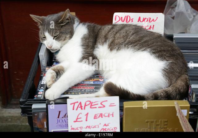 A cat relaxing on a second hand stall, UK - Stock-Bilder