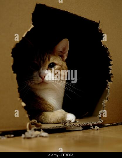 Cat In Cardboard Box - Stock Image