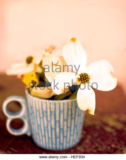 Dogwood Flowers - Stock-Bilder
