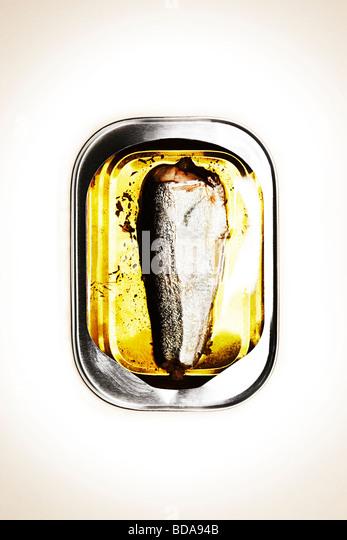 single sardine in a tin - Stock-Bilder
