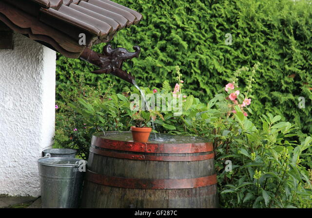 old wooden wine barrel (water butt) in garden collecting rainwater during severe rainfall.Germany.  Photo by Willy - Stock Image