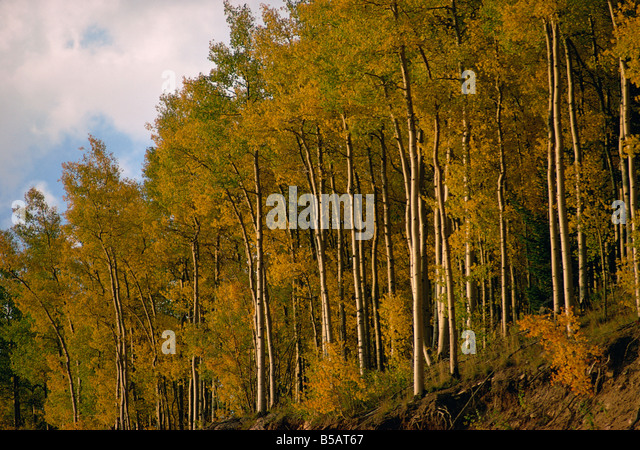 Trees in autumnal hues - Stock Image