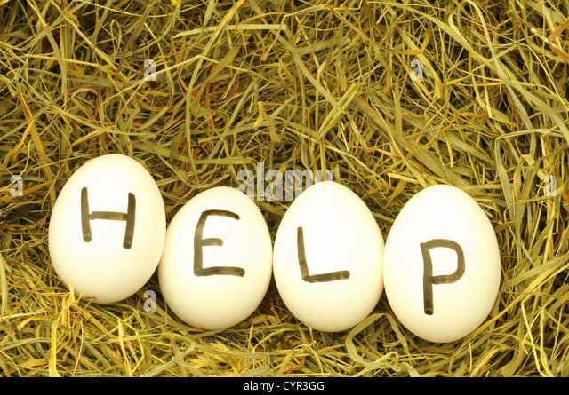 help or assistance concept with egg on hey or straw - Stock Image