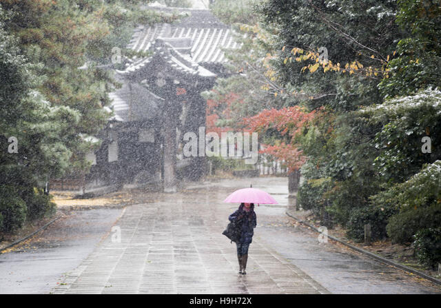 Tokyo, Tokyo, Japan. 24th Nov, 2016. Snow and sleet fell in Tokyo and other parts of eastern Japan, the first snowfall - Stock Image