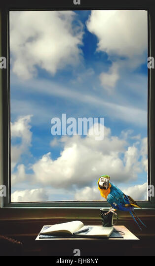 writer's room with a notebook , pen, cup and parrot on the table by the window - Stock Image