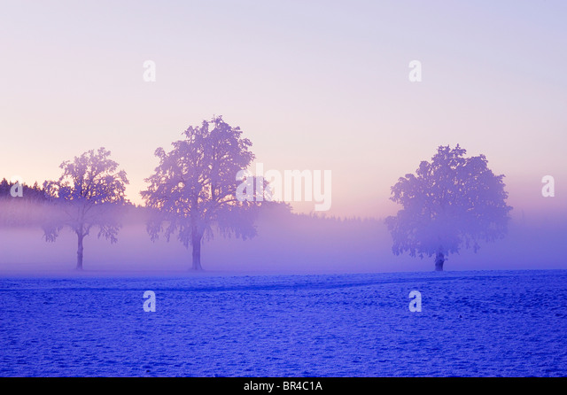 Winter landscape shrouded in fog, Horben, Aargau, Switzerland, Europe - Stock Image