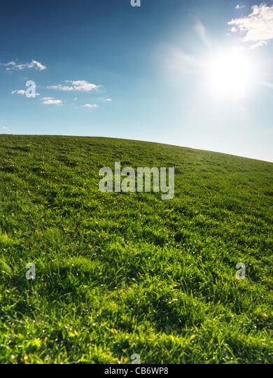 Green grassland landscape under blue clear sky lit with bright sunlight. Nature backdrop background. - Stock Image