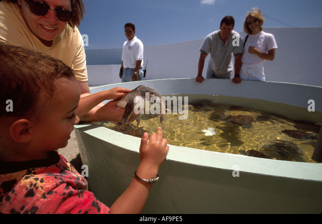 Grand Cayman BWI West Bay West Bay Cayman Turtle Farm breeding tank green sea turtles yearlings visitors - Stock Image