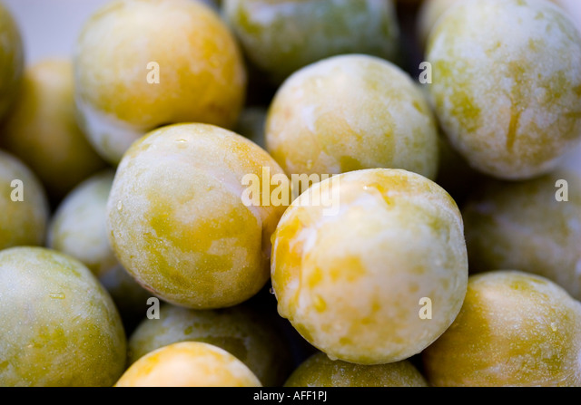 Close up shot of Greengages - Stock Image