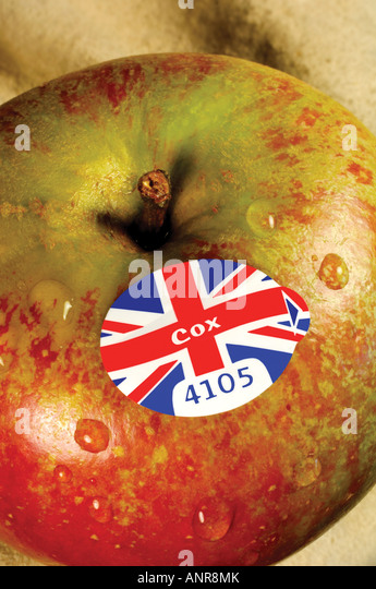 British Cox apple with supermarket produce label - Stock Image