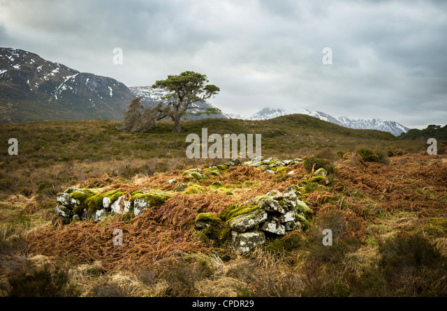 Remains of stone building Glen Affric, Glen Affric, Highlands, Scotland, UK - Stock Image