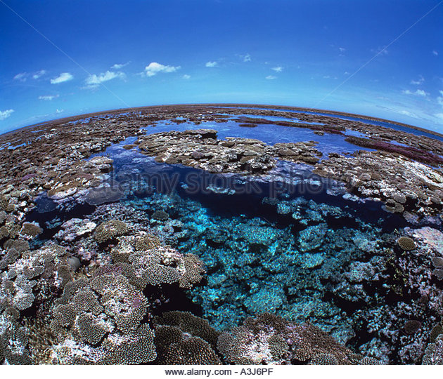 Yae stock photos yae stock images alamy for Coral garden 7 pools okinawa