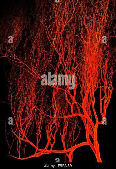 Nervous or blood system.  Medical illustration - Stock-Bilder