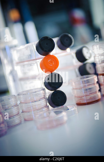cell culture flasks and petri dishes in science lab laboratory microbiology - Stock Image