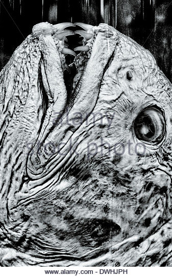 Close up detail of a preserved fish head with teeth, London, England, United Kingdom. - Stock Image