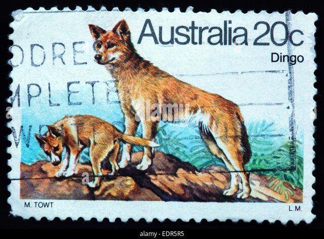 Used and postmarked Australia / Austrailian Stamp 20c Dingo L.M LM M TOWT - Stock Image