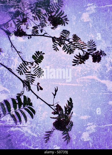 Leaves and branches on grunge background - Stock Image
