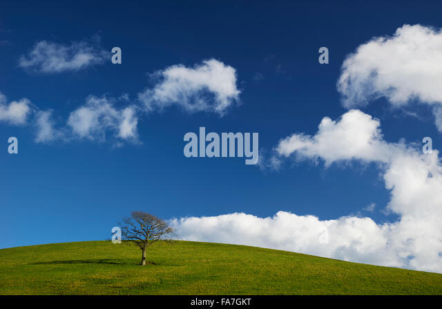 A single tree on a hillside - Stock Image