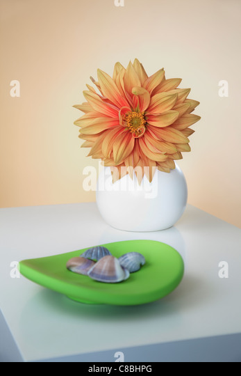 Orange Dahlia in round Vase and green decorative Plate - Stock Image
