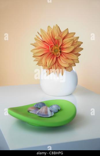 Orange Dahlia in round Vase and green decorative Plate - Stock Image
