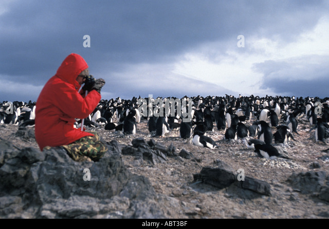 ANTARCTICA Tourist taking pictures of Adelie penguin rookery King George Island - Stock Image