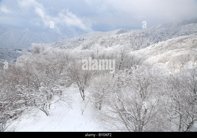 Winter Forest with Rime at Mount Kongo, Chihayaakasaka, Osaka, Japan - Stock Image
