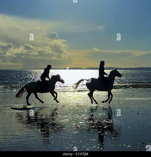 Horses on the beach - Stock Image
