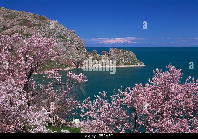 Coastline of Akdamar Island on Lake Van, with Mount Ararat on horizon, Anatolia, Turkey Minor, Eurasia - Stock Image