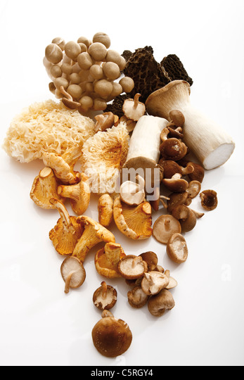 Assorted mushrooms, elevated view - Stock Image