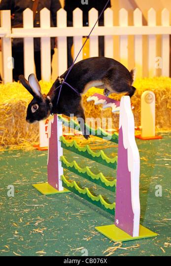 London, UK. Sunday 13th May 2012. Rabbit Show Jumping at the London Pet Show 2012 - Stock Image
