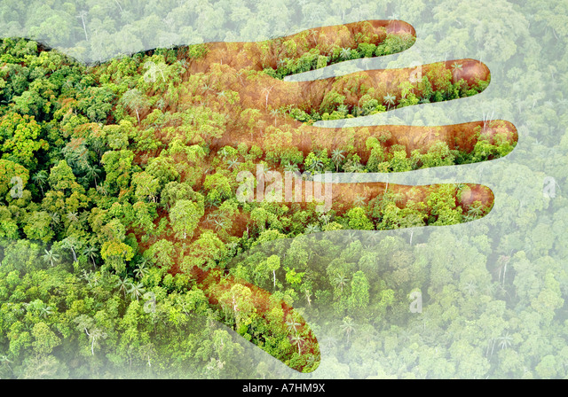 Man and the rainforest - Stock Image