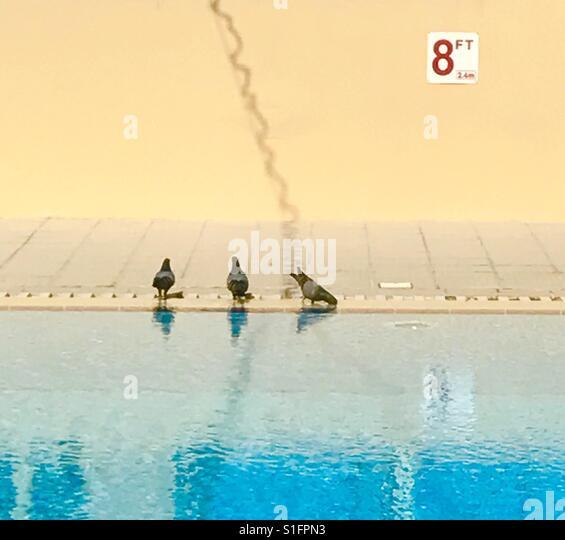 Swimming pool and pegion - Stock-Bilder
