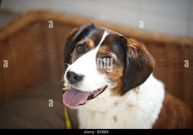 cute dog - Stock Image