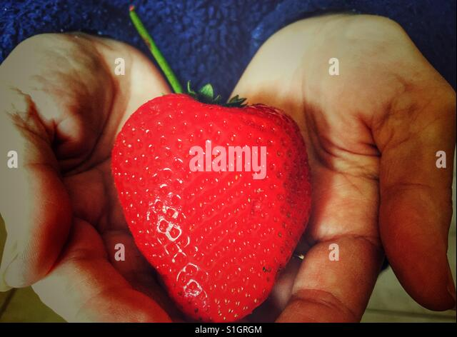 Holding a large bright red strawberry - Stock-Bilder