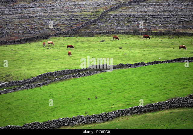Dry Stone Walls Ireland Landscape Stock Photos Amp Dry Stone