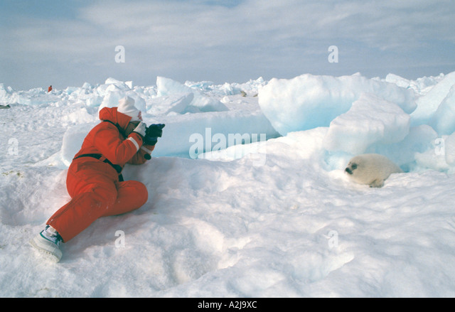 Ecotourism Canada harp seal - Stock Image