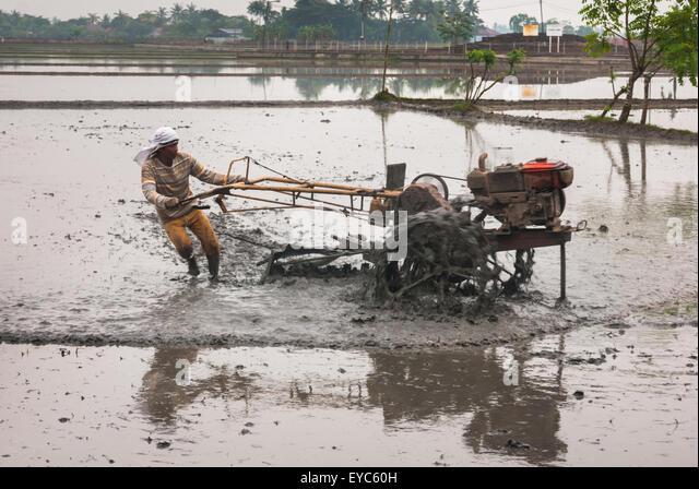 Farmer plowing rice field. - Stock Image